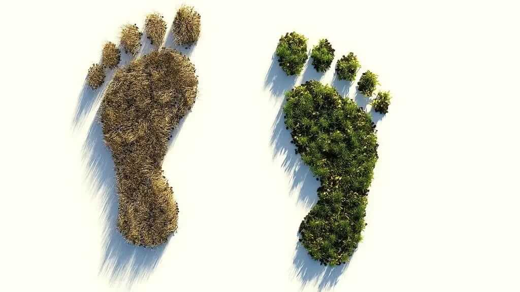 Two forests in the shape of feet