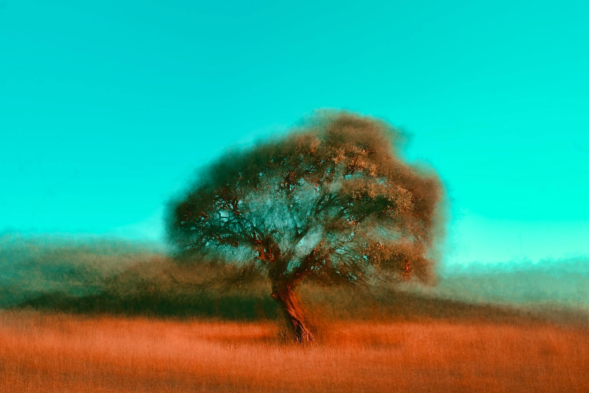 Tree in the country. Alone in the midst of beauty.