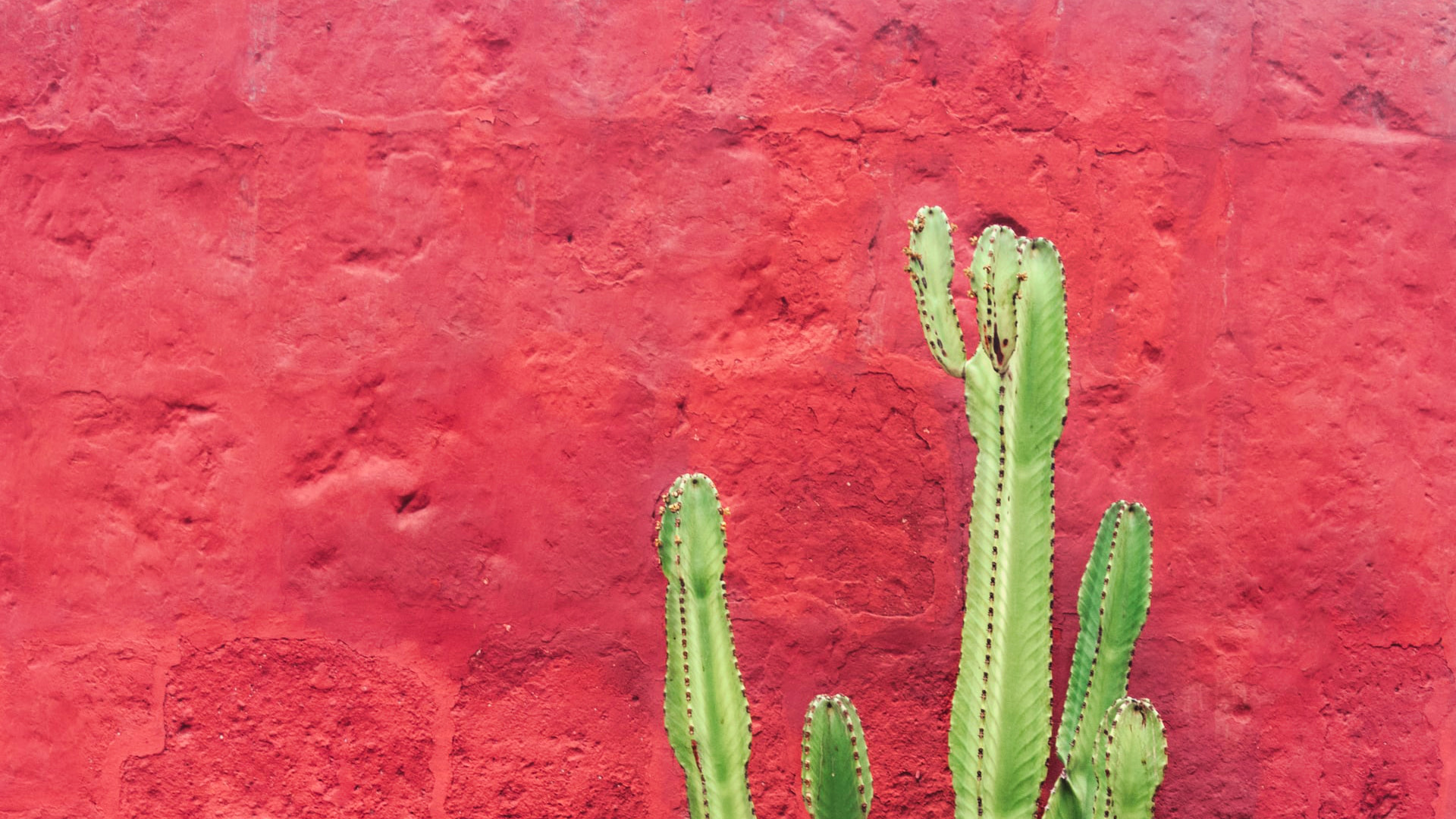 Green cactus in front of a red wall.